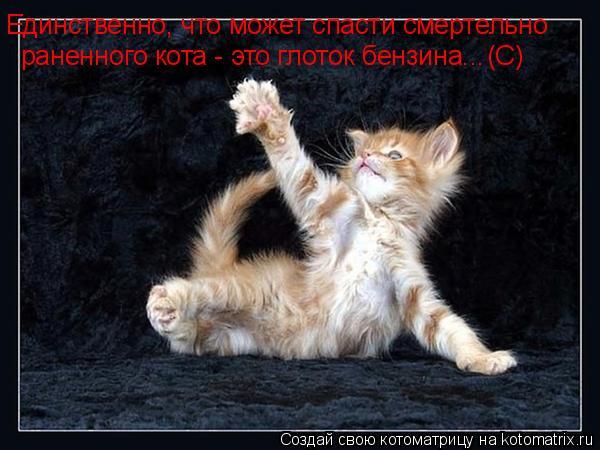 Котоматрица: Единственно, что может спасти смертельно раненного кота - это глоток бензина... (С)
