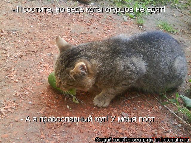 Котоматрица: - Простите, но ведь коты огурцов не едят! - А я православный кот! У меня пост...