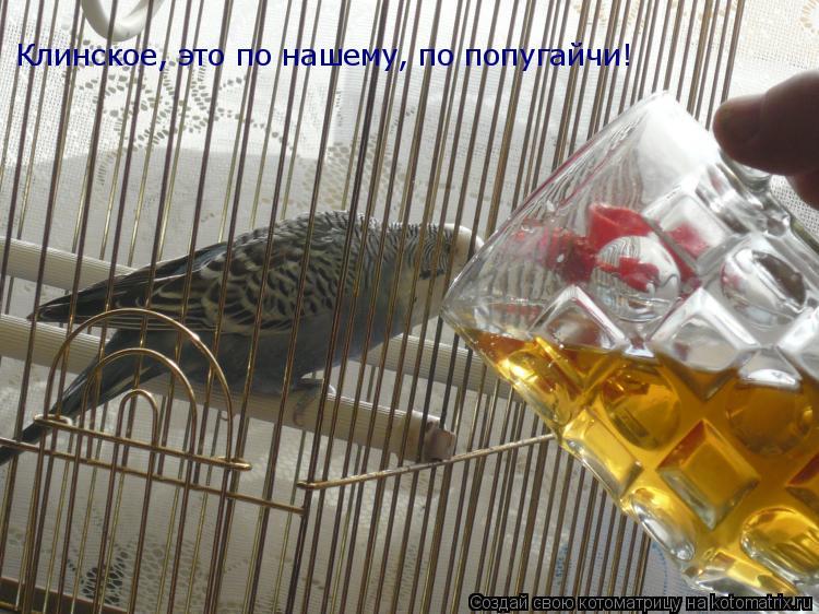 Котоматрица: Клинское, это по нашему, по попугайчи!