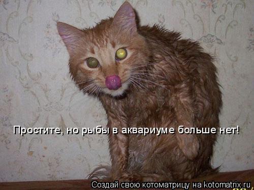 Котоматрица: Простите, но рыбы в аквариуме больше нет!