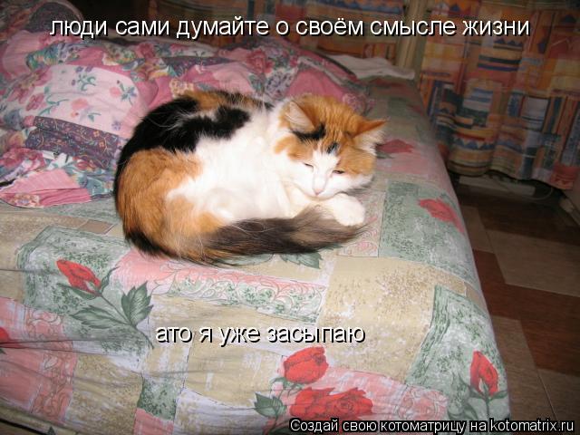 Котоматрица: люди сами думайте о своём смысле жизни ато я уже засыпаю