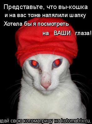 Котоматрица: Представьте, что вы-кошка и на вас тоже напялили шапку Хотела бы я посмотреть на   ВАШИ   глаза!