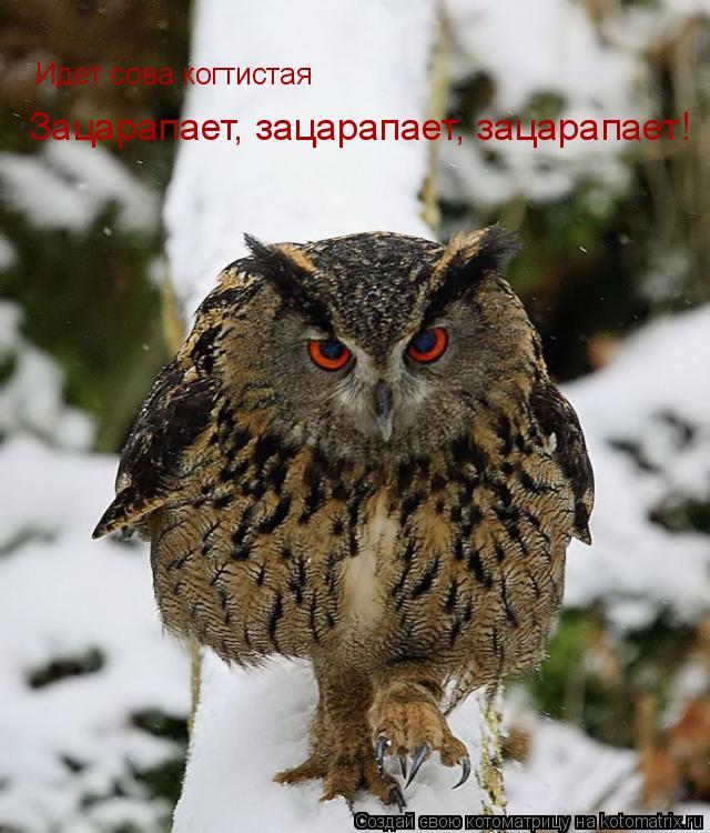 Котоматрица: Идет сова когтистая Зацарапает, зацарапает, зацарапает!