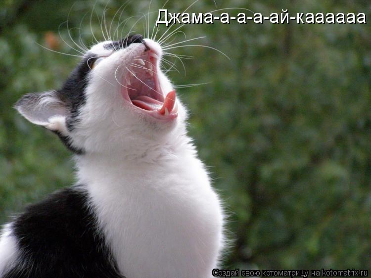 Котоматрица: Джама-а-а-а-ай-каааааа