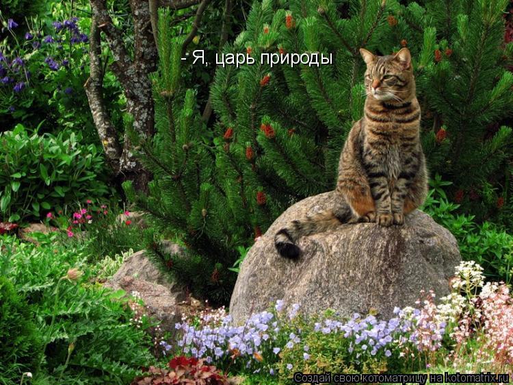 Котоматрица: - Я, царь природы