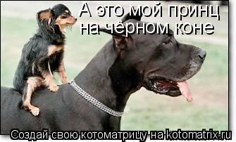 Котоматрица: А это мой принц  на чёрном коне