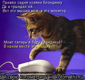 Котоматрица: Привёл седня хозяин блондинку Да и трындел ей... Вот это мышка моя, а это монитор.... Можт теперь я буду блондикой? В каком месте это мышка?!!
