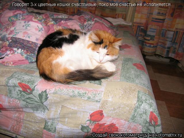 Котоматрица: Говорят 3-х цветные кошки счастливые, токо моё счастье не исполняется...