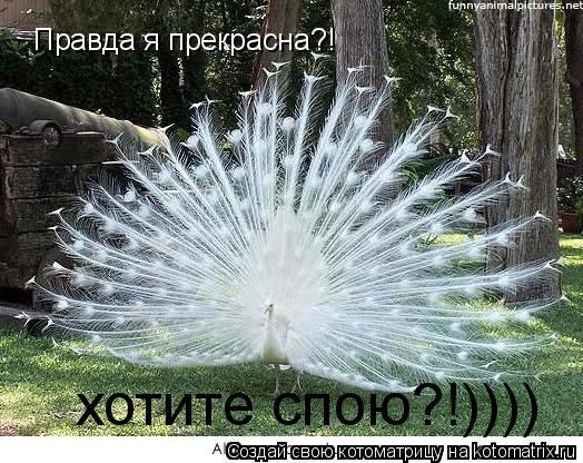Котоматрица: Правда я прекрасна?! хотите спою?!))))