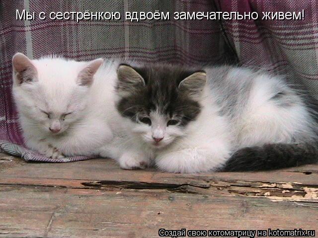 Котоматрица: Мы с сестрёнкою вдвоём замечательно живем!