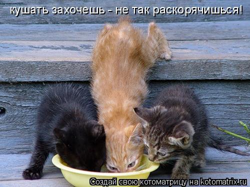 Котоматрица: кушать захочешь - не так раскорячишься!