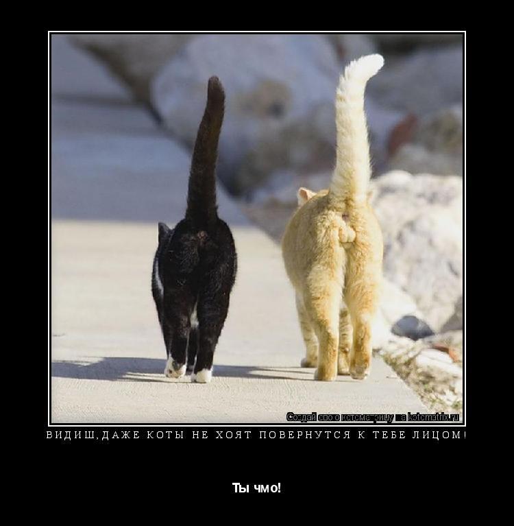 Котоматрица: Видиш,даже коты не хоят повернутся к тебе лицом! Ты чмо!