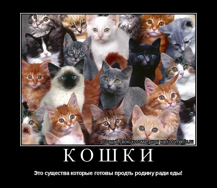 Котоматрица: Кошки Это существа которые готовы продть родину ради еды!