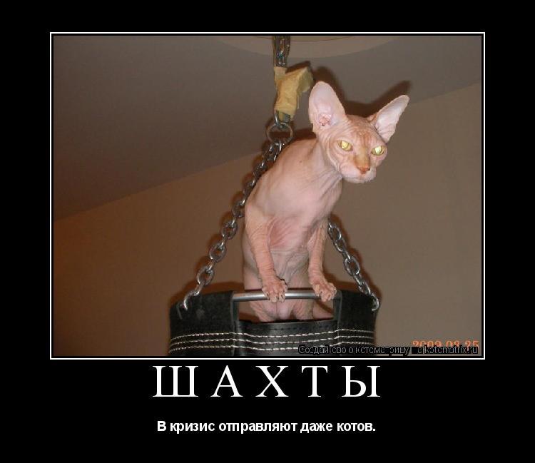 Котоматрица: Шахты В кризис отправляют даже котов.