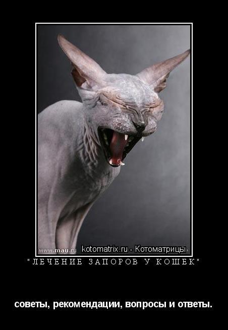 """Котоматрица: """"лечение запоров у кошек"""" советы, рекомендации, вопросы и ответы."""