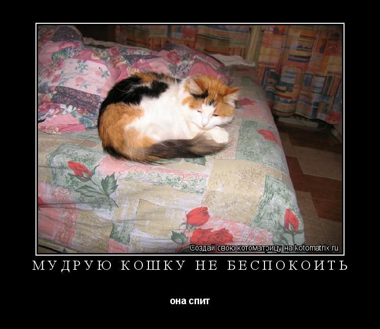 Котоматрица: мудрую кошку не беспокоить она спит
