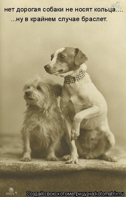 Котоматрица: нет дорогая собаки не носят кольца.... ...ну в крайнем случае браслет.