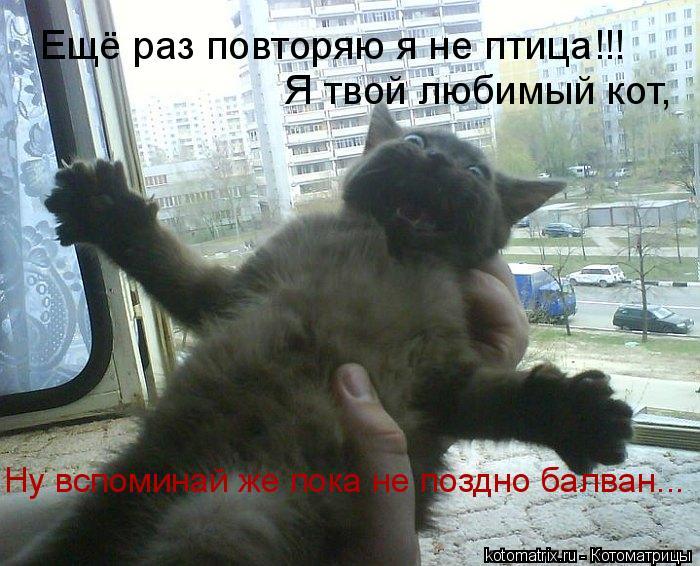 Котоматрица: Ещё раз повторяю я не птица!!! Я твой любимый кот, Ну вспоминай же пока не поздно балван...
