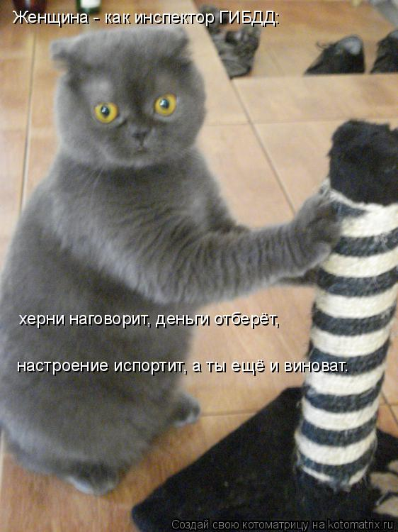 Котоматрица: Женщина - как инспектор ГИБДД: херни наговорит, деньги отберёт, настроение испортит, а ты ещё и виноват.