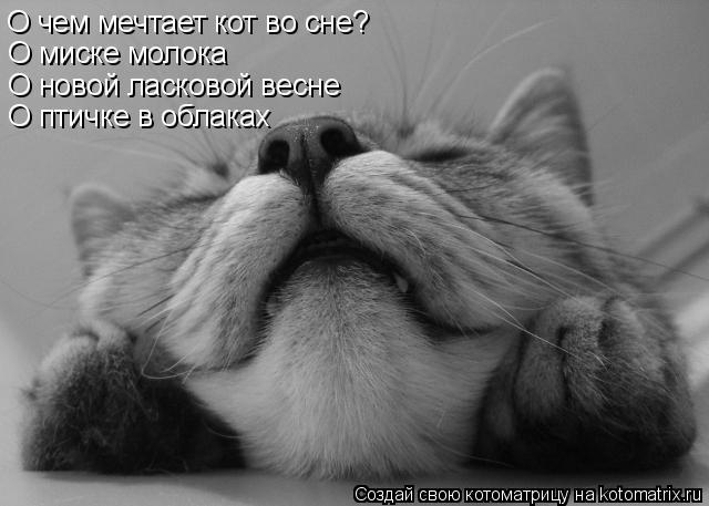 Котоматрица: О чем мечтает кот во сне? О миске молока О новой ласковой весне О птичке в облаках