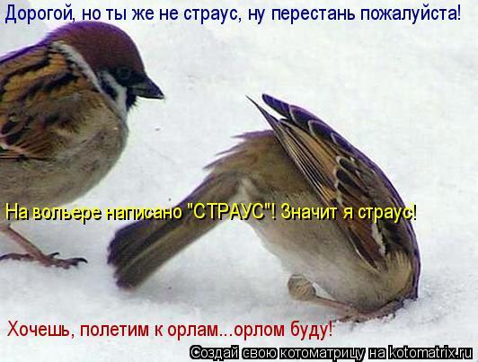 """Котоматрица: Дорогой, но ты же не страус, ну перестань пожалуйста! На вольере написано """"СТРАУС""""! Значит я страус! Хочешь, полетим к орлам...орлом буду!"""