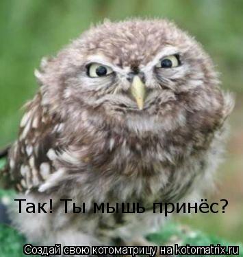 Котоматрица: Так! Ты мышь принёс?