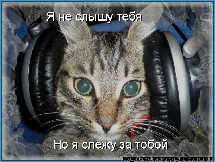 Котоматрица: Я не слышу тебя Но я слежу за тобой