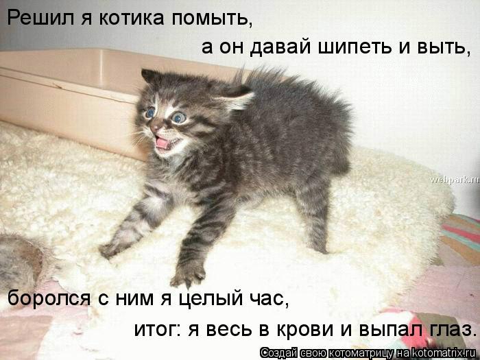 Котоматрица: Решил я котика помыть, а он давай шипеть и выть, боролся с ним я целый час, итог: я весь в крови и выпал глаз.