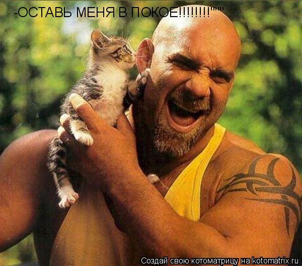 """Котоматрица: -ОСТАВЬ МЕНЯ В ПОКОЕ!!!!!!!!"""""""""""""""