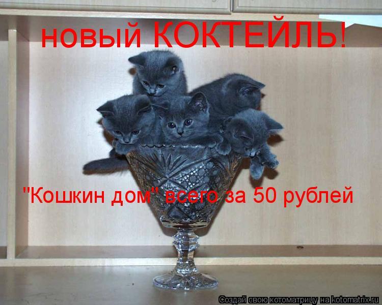 """Котоматрица: новый КОКТЕЙЛЬ! """"Кошкин дом"""" всего за 50 рублей"""