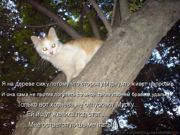 Котоматрица: Я на дереве сижу,потому что сторожу,Мурку,что живет напротив. И она сама не против,погулять со мной таким,парнем бравым,удалым. Только вот хо