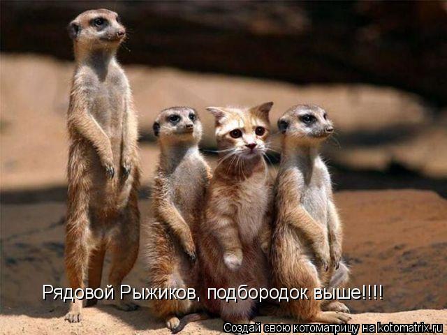 Котоматрица: Рядовой Рыжиков, подбородок выше!!!!