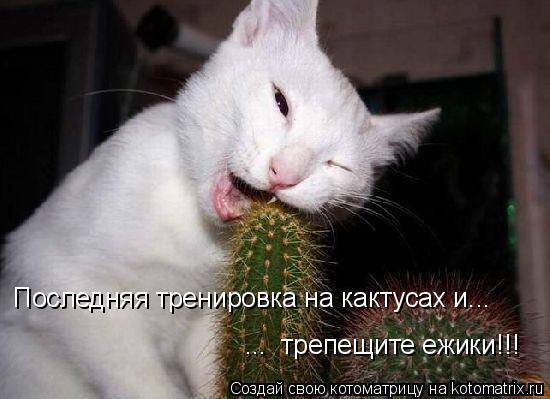 Котоматрица: Последняя тренировка на кактусах и... ...  трепещите ежики!!!