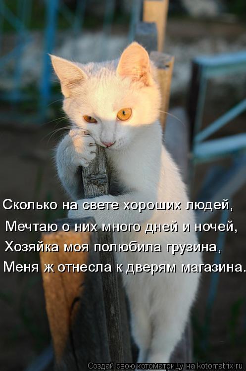 Котоматрица: Мечтаю о них много дней и ночей, Сколько на свете хороших людей, Хозяйка моя полюбила грузина, Меня ж отнесла к дверям магазина.
