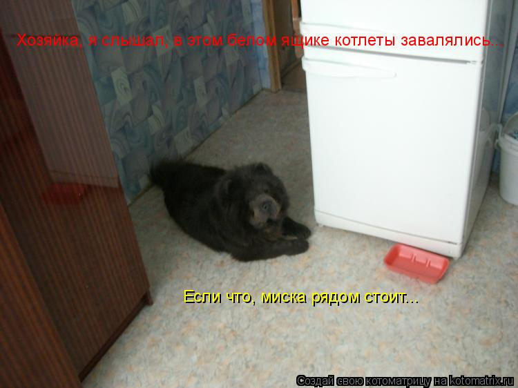 Котоматрица: Хозяйка, я слышал, в этом белом ящике котлеты завалялись... Если что, миска рядом стоит...