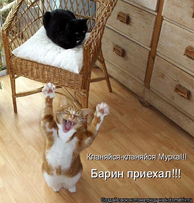 Котоматрица: Кланяйся-кланяйся Мурка!!! Барин приехал!!!