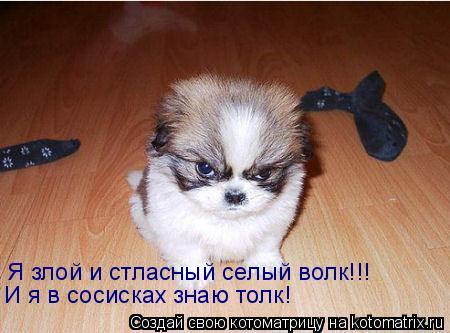 Котоматрица: Я злой и стласный селый волк!!! И я в сосисках знаю толк!