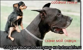 Котоматрица: собачии гонки скачи мой скакун