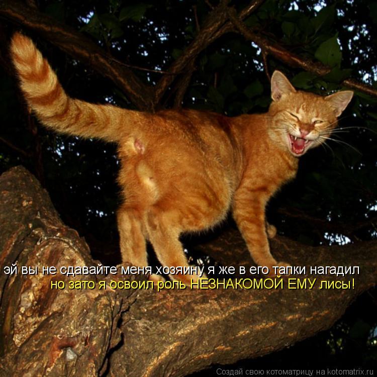 Котоматрица: эй вы не сдавайте меня хозяину я же в его тапки нагадил но зато я освоил роль НЕЗНАКОМОЙ ЕМУ лисы!