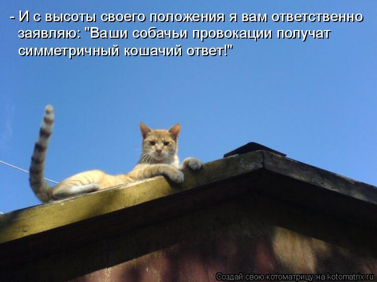 """Котоматрица: - И с высоты своего положения я вам ответственно  заявляю: """"Ваши собачьи провокации получат  симметричный кошачий ответ!"""""""