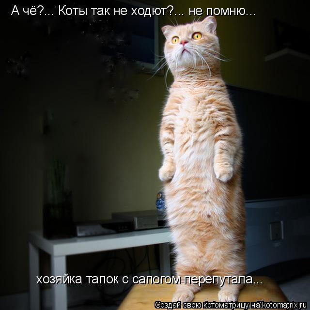 Котоматрица: А чё?... Коты так не ходют?... не помню... хозяйка тапок с сапогом перепутала...