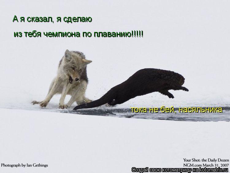 Котоматрица: А я сказал, я сделаю  из тебя чемпиона по плаванию!!!!! тока не бей, насяльника