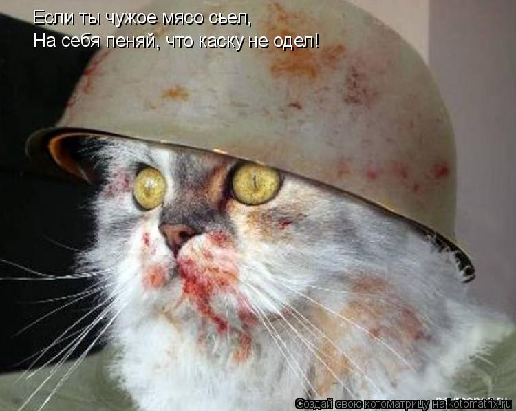 Котоматрица: Если ты чужое мясо сьел, На себя пеняй, что каску не одел!
