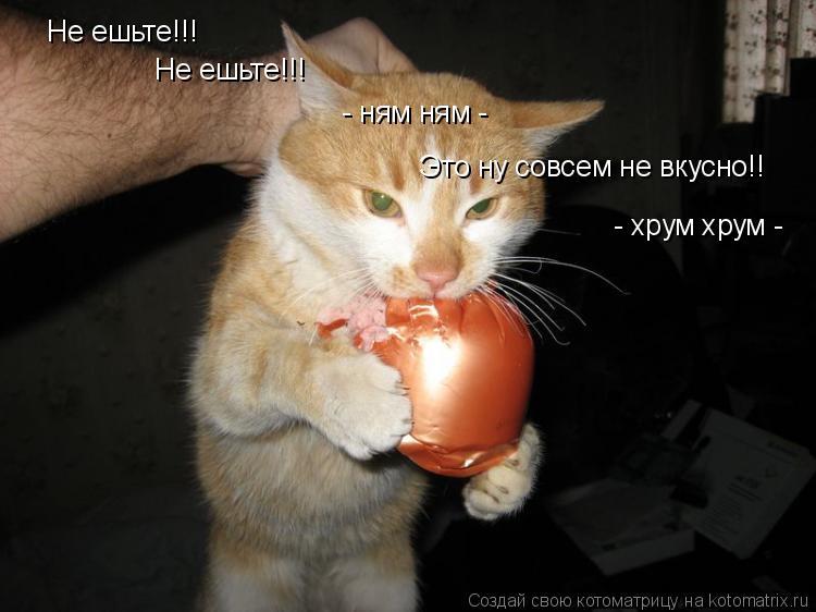 Котоматрица: Не ешьте!!! Не ешьте!!! - ням ням - Это ну совсем не вкусно!! - хрум хрум -