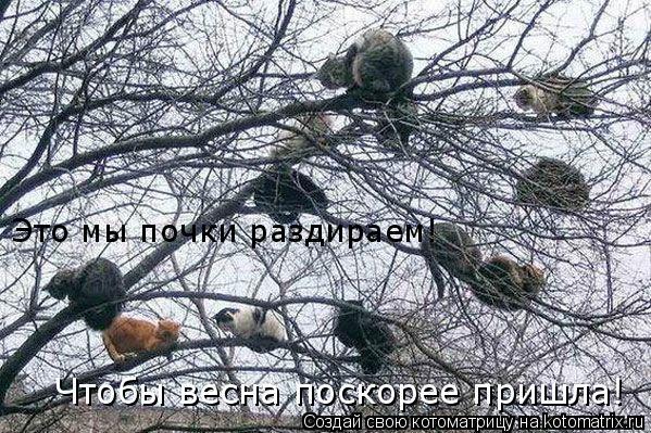 Котоматрица: Это мы почки раздираем!  Чтобы весна поскорее пришла!
