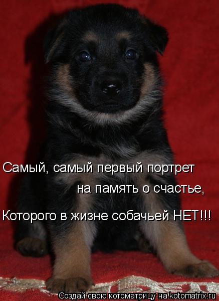 Котоматрица: Самый, самый первый портрет на память о счастье, Которого в жизне собачьей НЕТ!!!