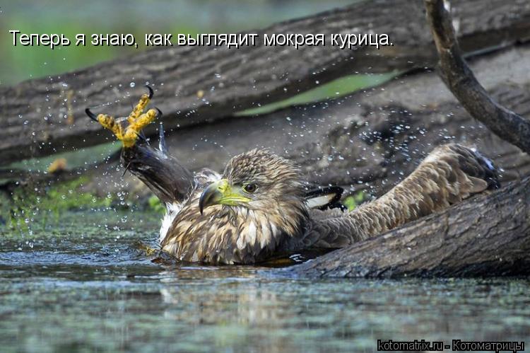 Котоматрица: Теперь я знаю, как выглядит мокрая курица.