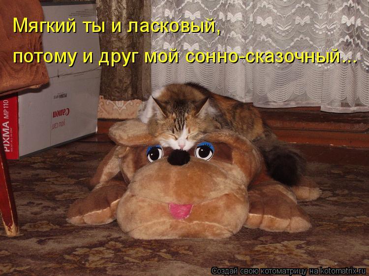 Котоматрица: Мягкий ты и ласковый, потому и друг мой сонно-сказочный...