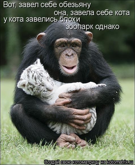 Котоматрица: Вот, завел себе обезьяну она, завела себе кота у кота завелись блохи зоопарк однако
