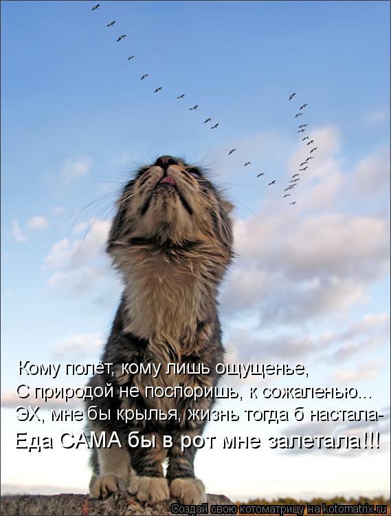 Котоматрица: Кому полёт, кому лишь ощущенье, С природой не поспоришь, к сожаленью... ЭХ, мне бы крылья, жизнь тогда б настала- Еда САМА бы в рот мне залетала!